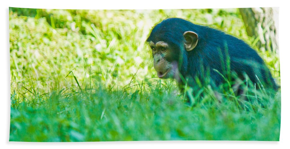 Chimpanzee Bath Sheet featuring the photograph Baby Chimp In The Grass by Jonny D