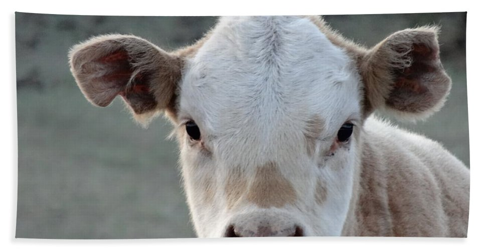 Baby Cow In Colorado Bath Towel featuring the photograph Baby Cow In Colorado by Dan Sproul