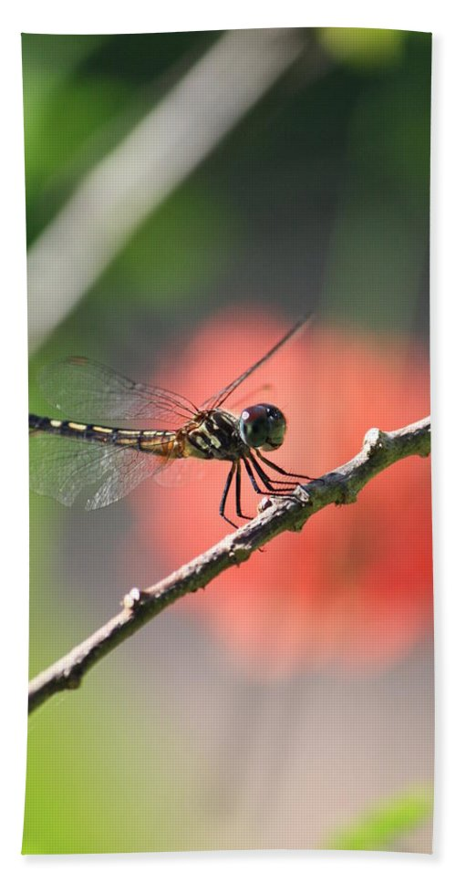 Dragonfly Bath Sheet featuring the photograph Baby Dragonfly by Mandy Shupp