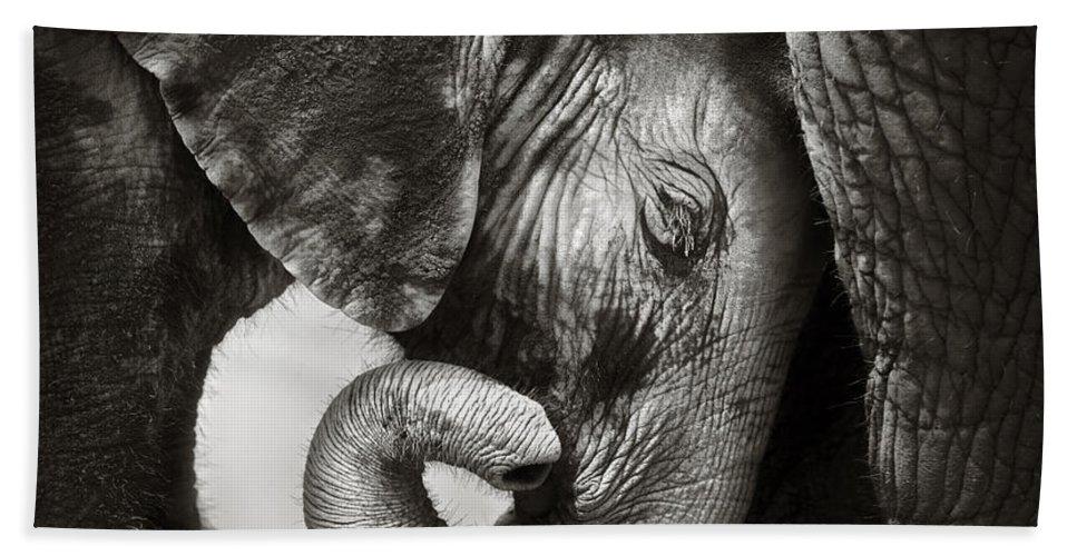 Elephant Hand Towel featuring the photograph Baby Elephant Seeking Comfort by Johan Swanepoel