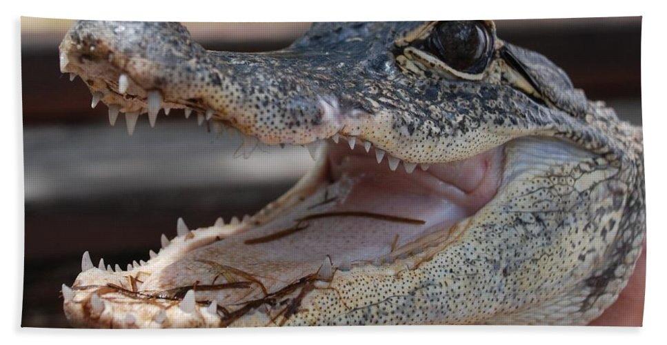 Macro Hand Towel featuring the photograph Baby Gator by Rob Hans