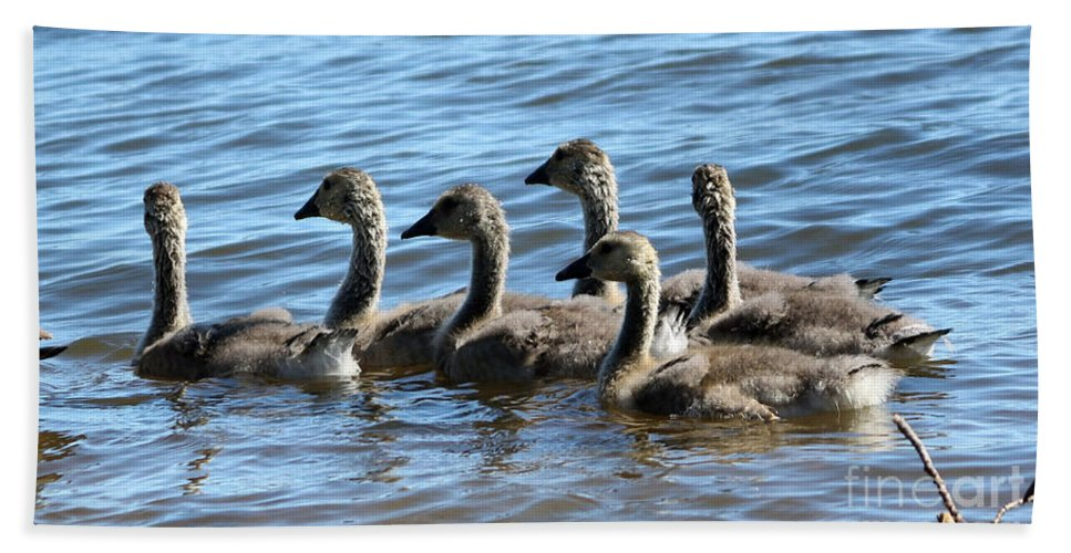 Wildlife Hand Towel featuring the photograph Baby Geese by Lori Tordsen