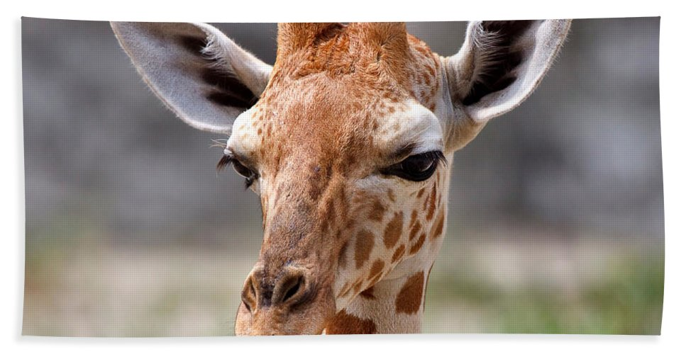 Nature Hand Towel featuring the photograph Baby Giraffe by Louise Heusinkveld
