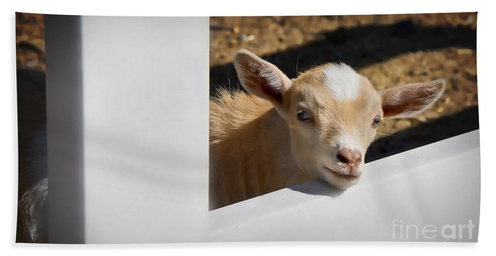 Goat Bath Sheet featuring the photograph Baby Goat by Dianne Phelps