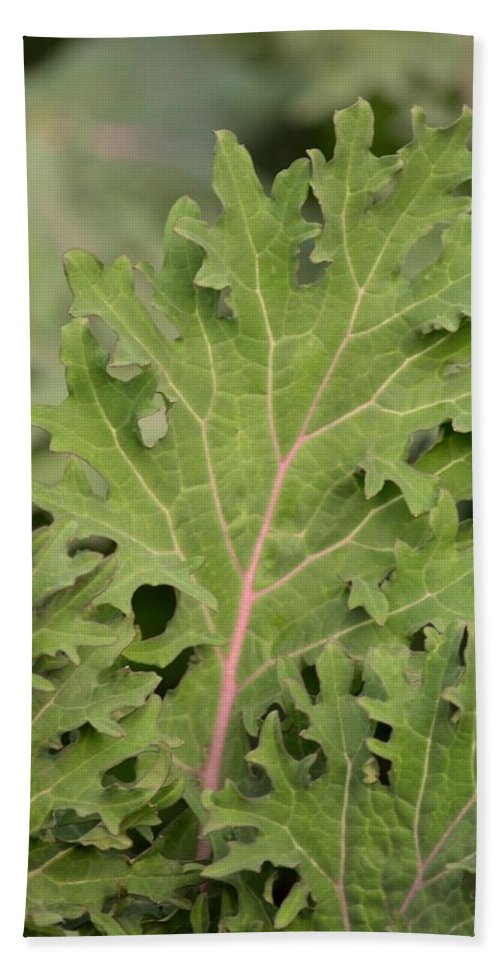 Baby Kale Hand Towel featuring the photograph Baby Kale by Maria Urso