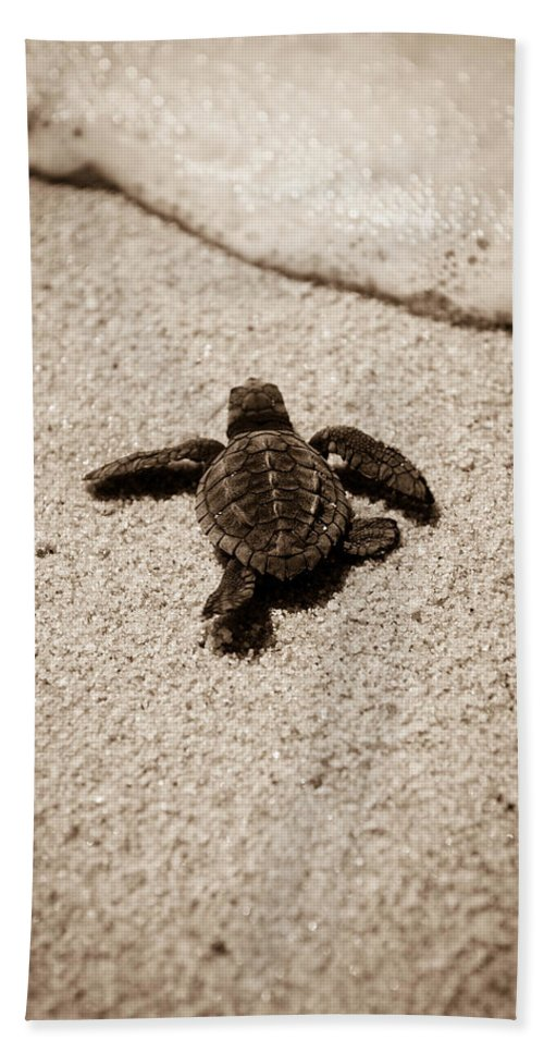 Baby Loggerhead Hand Towel featuring the photograph Baby Sea Turtle by Sebastian Musial