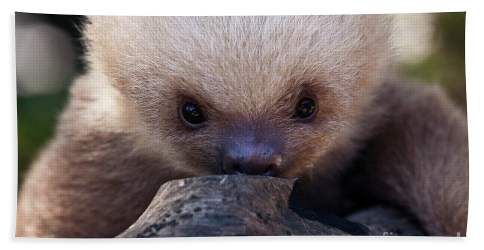 Sloth Bath Sheet featuring the photograph Baby Sloth 2 by Heiko Koehrer-Wagner