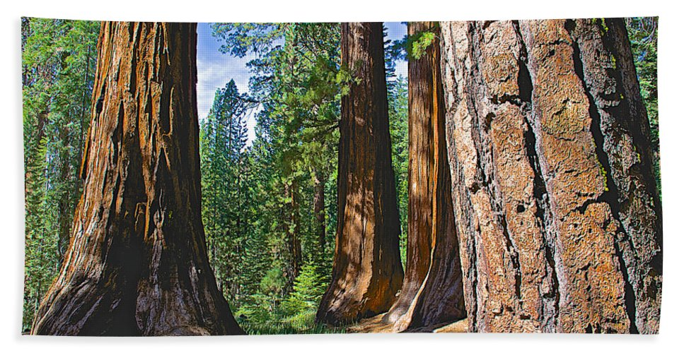 Bachelor And Three Graces In Mariposa Grove In Yosemite National Park Bath Sheet featuring the photograph Bachelor And Three Graces In Mariposa Grove In Yosemite National Park-california by Ruth Hager