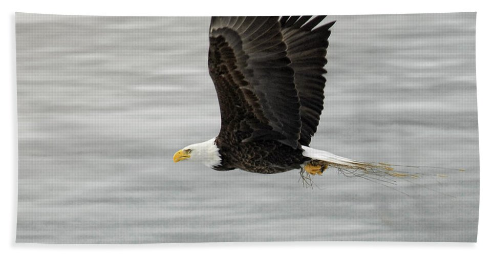 Eagles Hand Towel featuring the photograph Back To The Nest by Claudia Kuhn