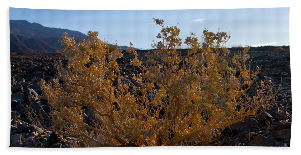 Desert Foliage Sagebrush Deserts Death Valley National Park California Plant Plants Bath Sheet featuring the photograph Backlit Desert Foliage by Bob Phillips