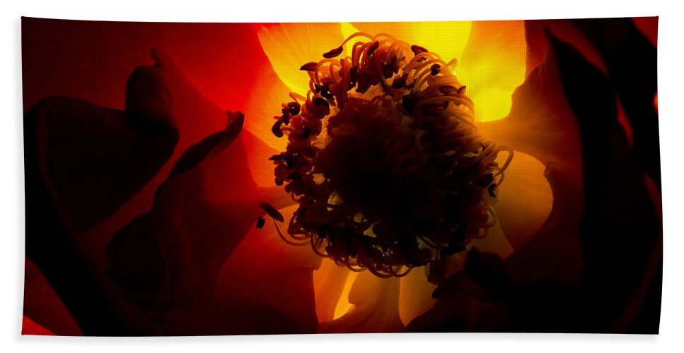 Nature Bath Sheet featuring the photograph Backlit Flower by Fabrizio Troiani