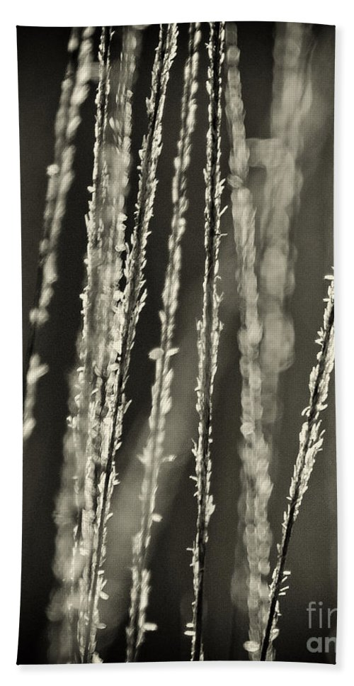 North America Hand Towel featuring the photograph Backlit Sepia Toned Wild Grasses In Black And White by Dave Welling