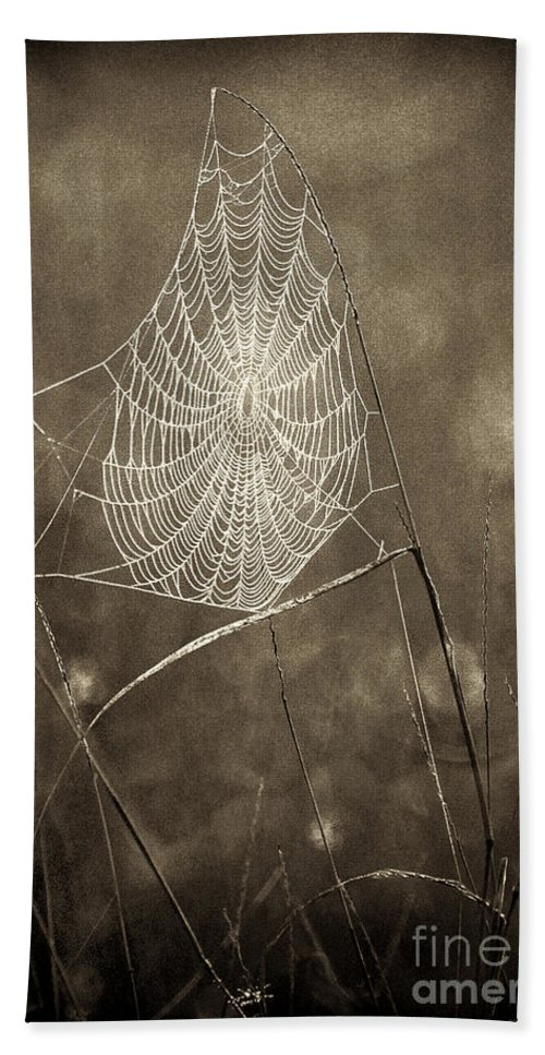 Wildlife Hand Towel featuring the photograph Backlit Spider Web In Sepia Tones by Dave Welling