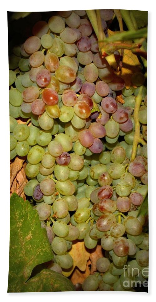 Fruits Bath Sheet featuring the photograph Backyard Garden Series -hidden Grape Cluster by Carol Groenen