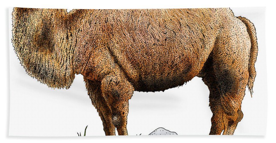 Illustration Hand Towel featuring the photograph Bactrian Camel by Roger Hall