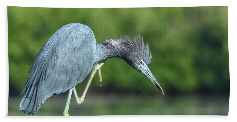 Florida Bath Sheet featuring the photograph Bad Hair Day by Jane Luxton