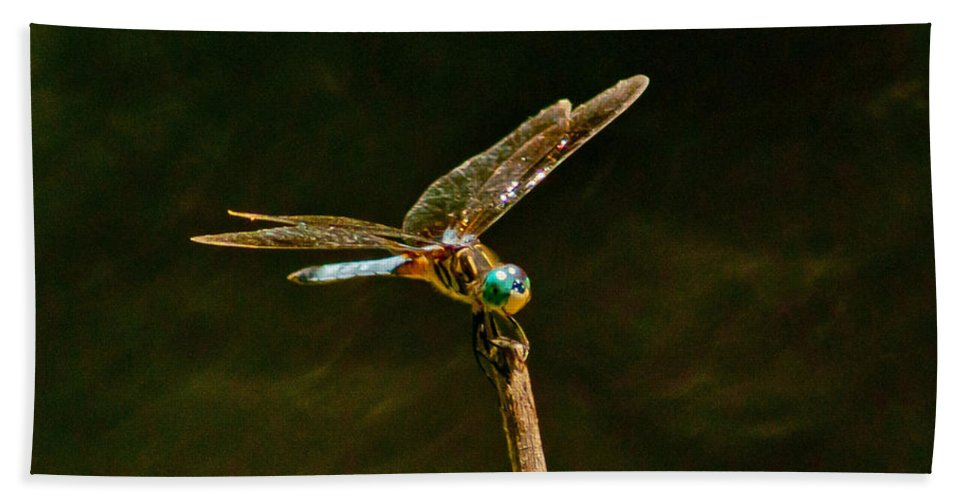 Dragonfly Bath Sheet featuring the photograph Balancing Dragonfly by Stephen Whalen