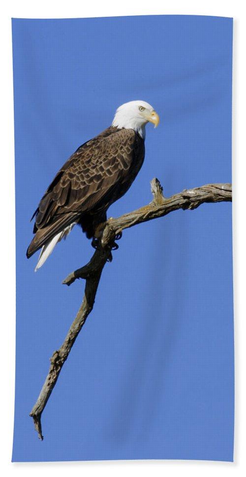 Eagle Bath Sheet featuring the photograph Bald Eagle 4 by David Lester