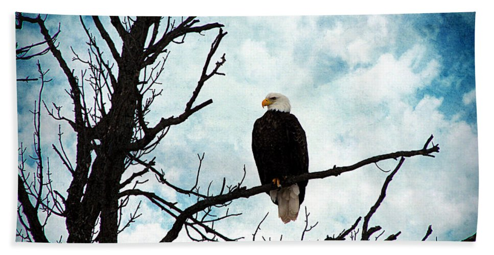 Bald Eagle Hand Towel featuring the photograph Bald Eagle by Cassie Peters