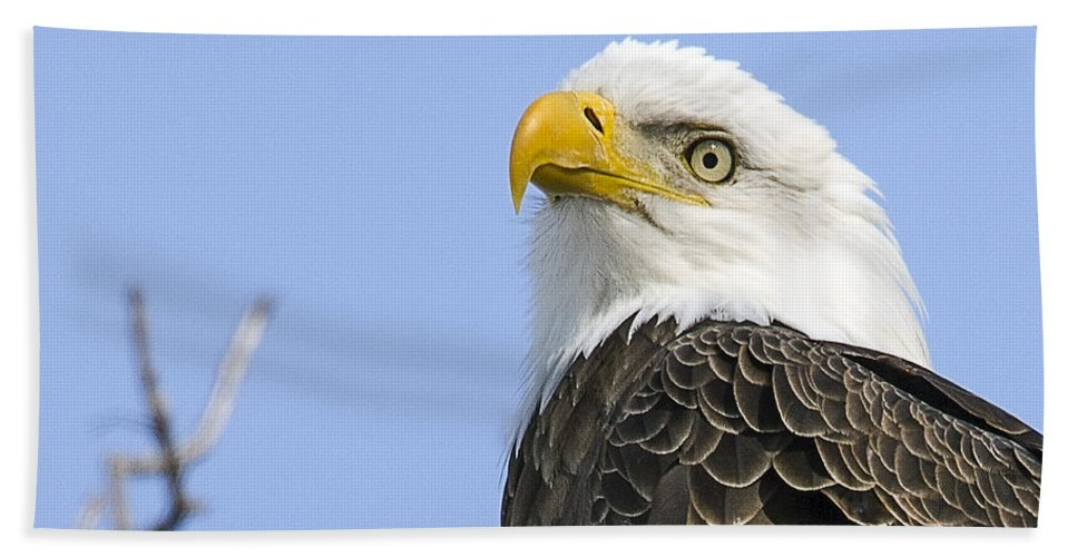 Bald Eagle Hand Towel featuring the photograph Bald Eagle Close Up by John Vose