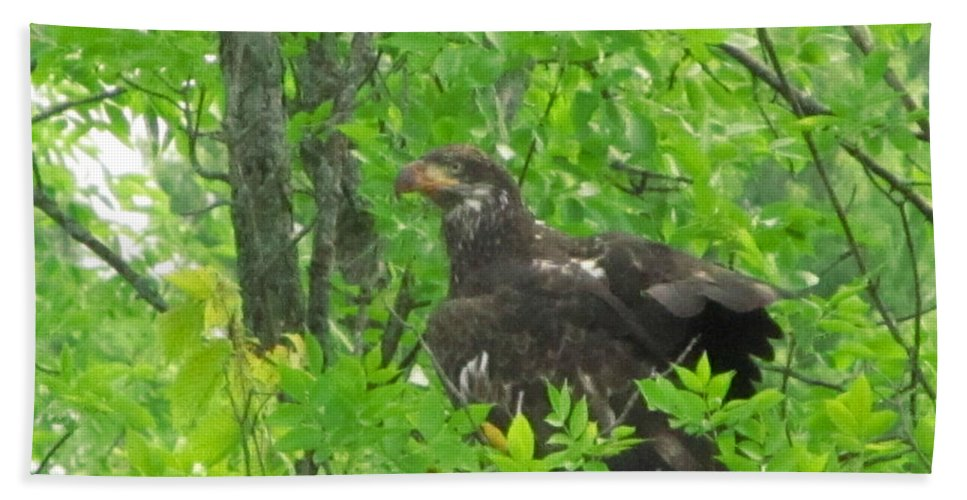 Bald Eagle Bath Sheet featuring the photograph Bald Eagle In A Tree by Robert Nacke