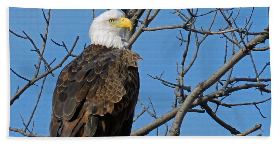 Bald Eagle Bath Sheet featuring the photograph Bald Eagle by Lori Amway