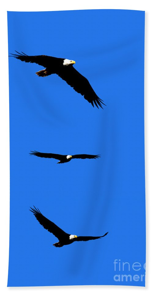 Eagle Bath Sheet featuring the photograph Bald Eagle Triptych by Thomas Marchessault