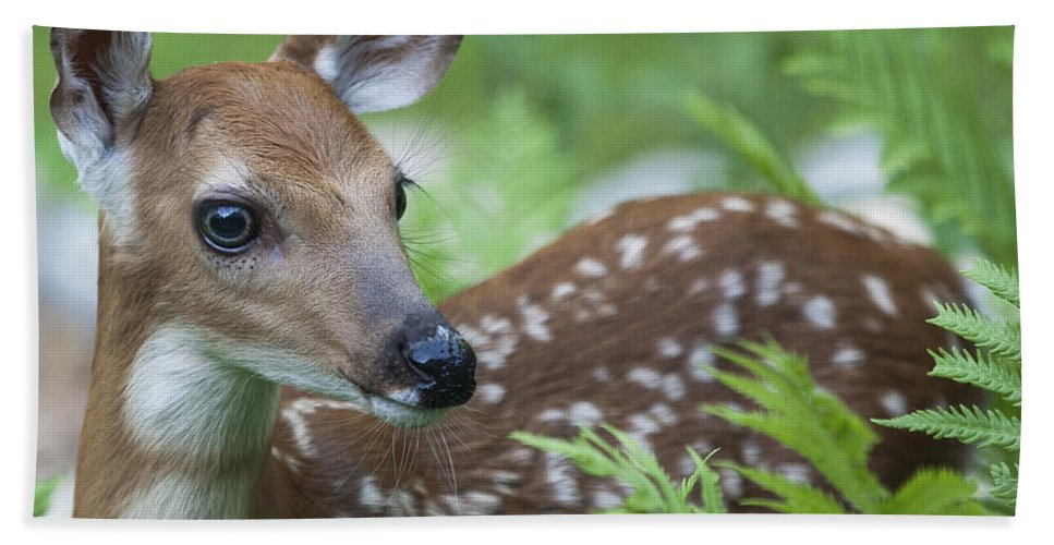 Deer Hand Towel featuring the photograph Bambi by Emma England
