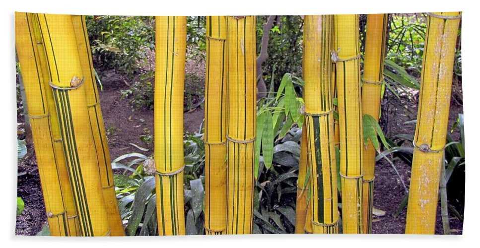 Plant Hand Towel featuring the photograph Bamboo by Bob Slitzan