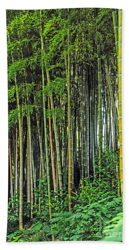 Nature Bath Sheet featuring the photograph Bamboo Hill by Elvis Vaughn