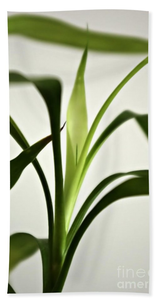 Leaves Hand Towel featuring the photograph Bamboo Leaves by Zoran Berdjan