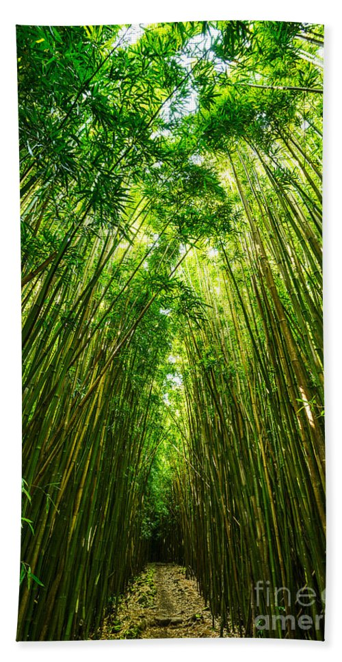 Bamboo Forest Hand Towel featuring the photograph Bamboo Sky - The Magical And Mysterious Bamboo Forest Of Maui. by Jamie Pham