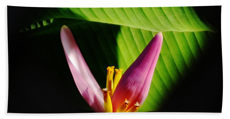 Banana Hand Towel featuring the photograph Banana Flower by Lizi Beard-Ward