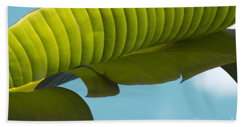 Hand Towel featuring the photograph Banana Leaf And Maui Sky by Sharon Mau