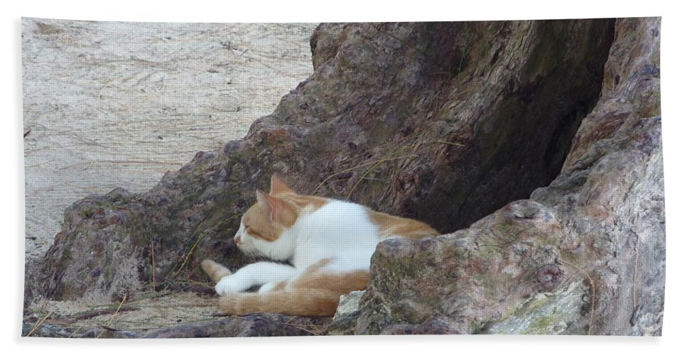 Barbados Bath Sheet featuring the photograph Barbados Beach Cat by Diane Palmer