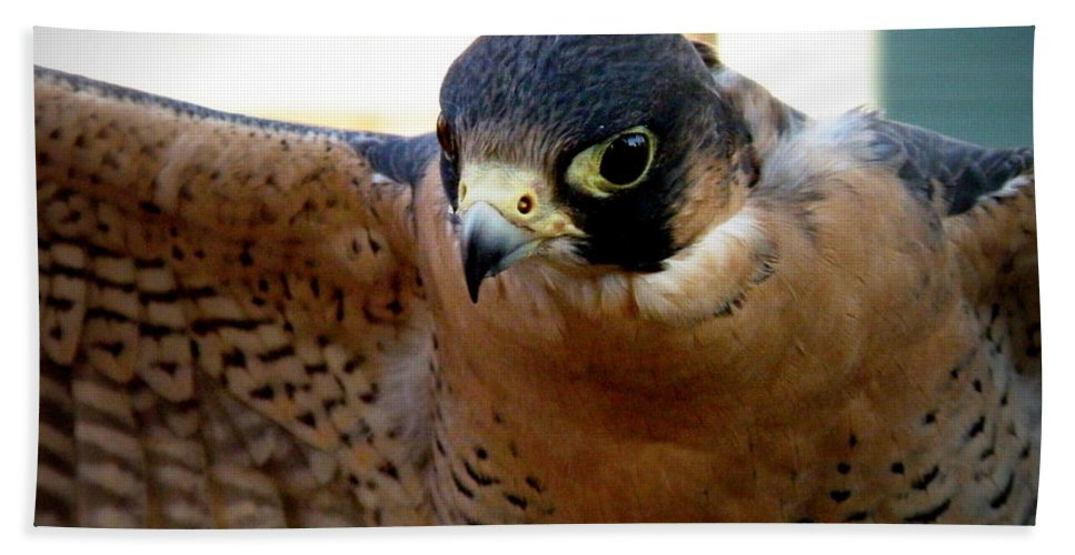Falcon Hand Towel featuring the photograph Barbary Falcon Wings Stretched by Lainie Wrightson