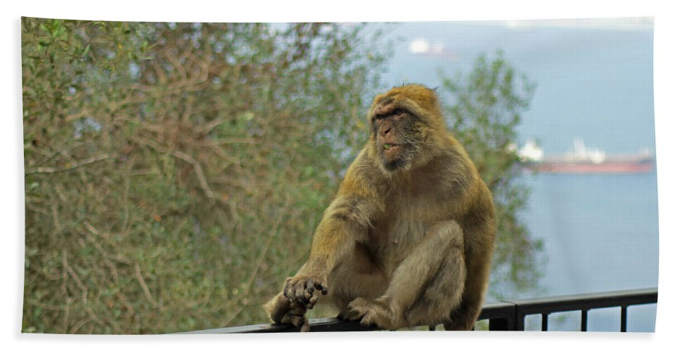 Barbary Macaque Hand Towel featuring the photograph Barbary Macaque by Tony Murtagh
