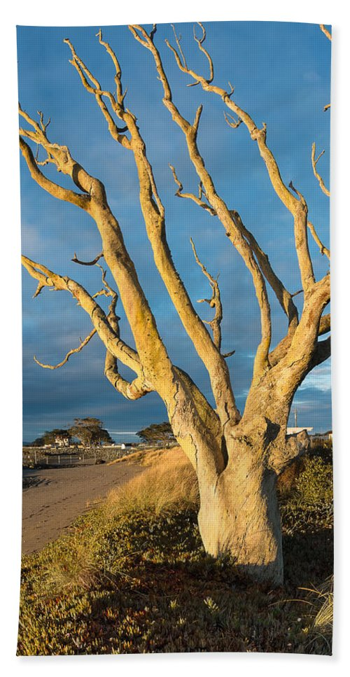 Humboldt Bay Hand Towel featuring the photograph Bare Tree On The Spit by Greg Nyquist