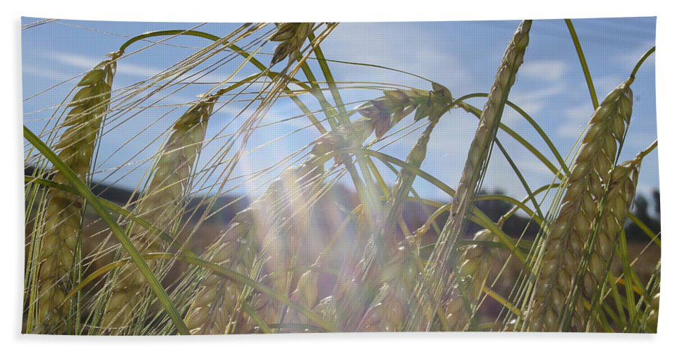 Barley Bath Sheet featuring the photograph Barley Field by Jacqueline Moore