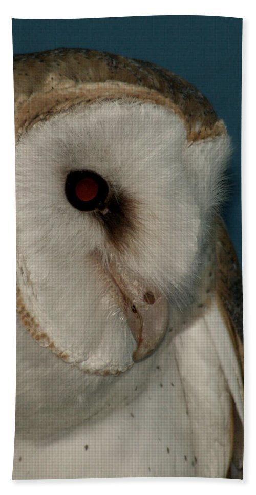 Barn Owl Hand Towel featuring the photograph Barn Owl 2 by Ernie Echols