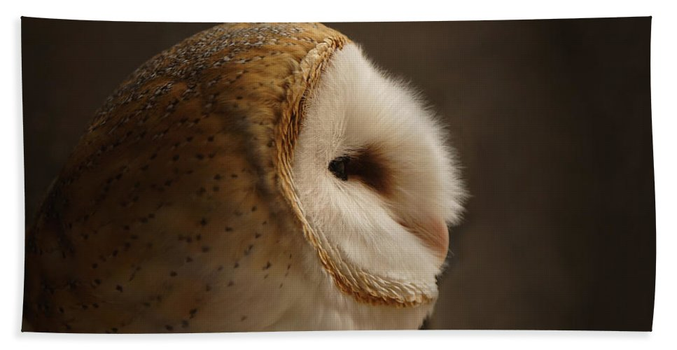Barn Owl Bath Sheet featuring the photograph Barn Owl 3 by Ernie Echols