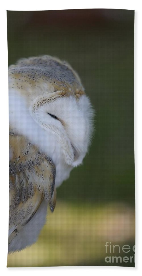Barn Owl Bath Sheet featuring the photograph Barn Owl by Jenny Potter