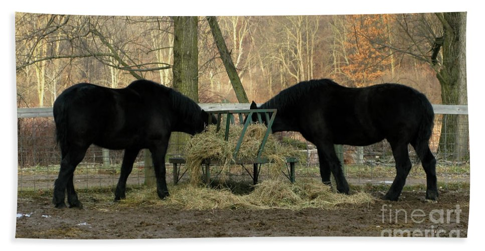 Horse Hand Towel featuring the photograph Barnyard Beauties by Ann Horn