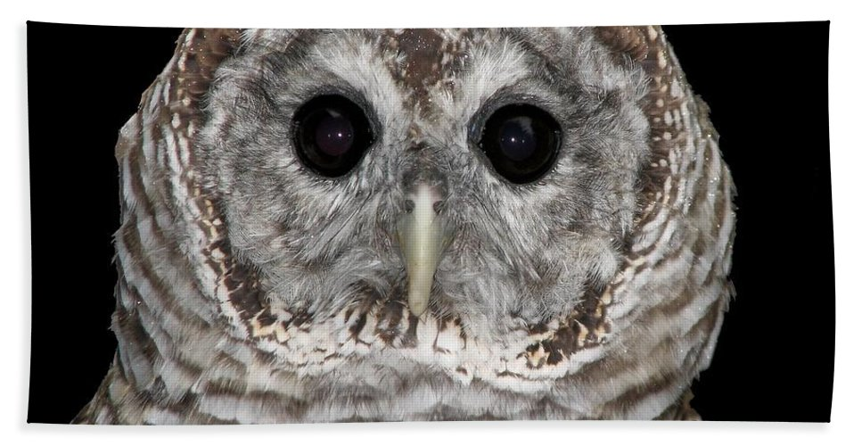 Barred Owl Hand Towel featuring the photograph Barred Owl 3 by Rose Santuci-Sofranko