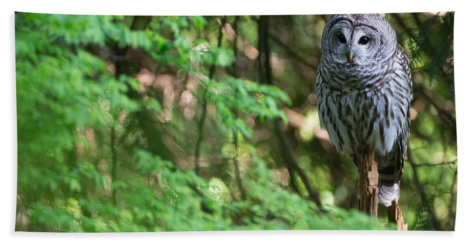 Barred Owl Hand Towel featuring the photograph Barred Owl In Forest by Max Waugh