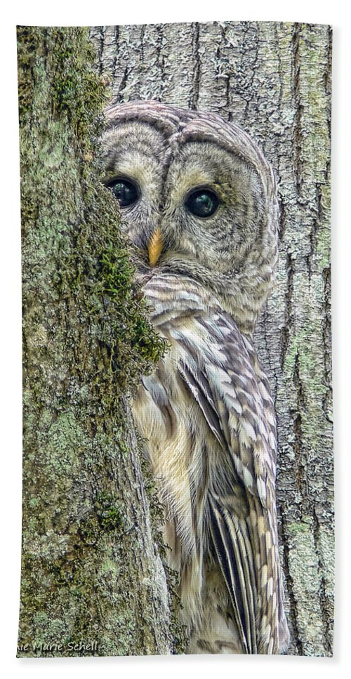 Owl Bath Towel featuring the photograph Barred Owl Peek A Boo by Jennie Marie Schell