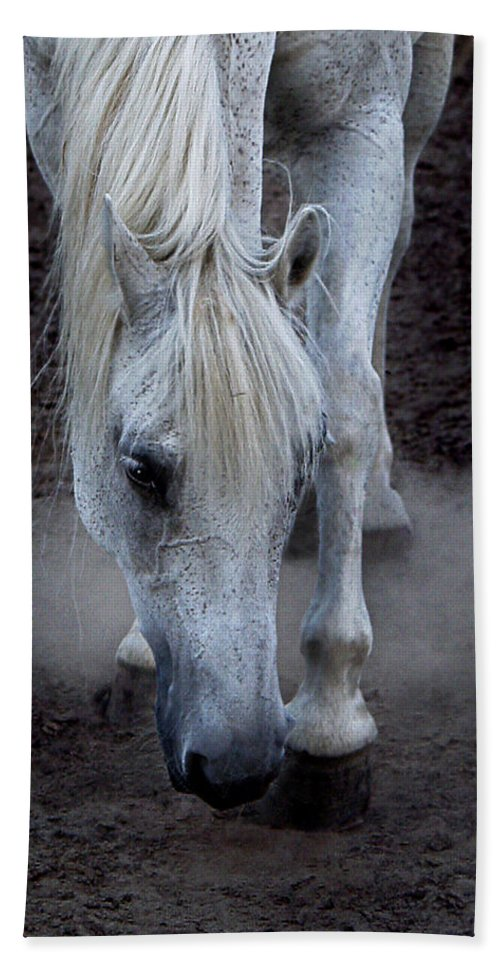 Horse Hand Towel featuring the photograph Basic Instincts by Joachim G Pinkawa