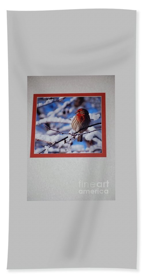 Bird Hand Towel featuring the photograph Basking In The Light by Sharon Elliott