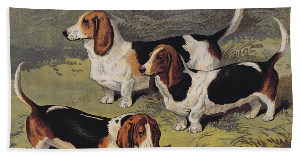 Dogs Bath Sheet featuring the painting Basset Hounds by English School
