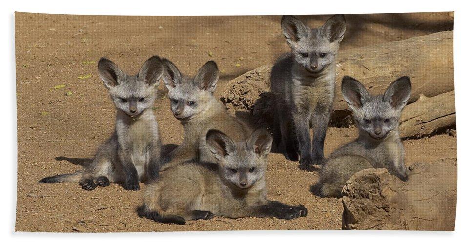 Bat-eared Fox Pups Bath Towel